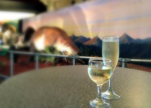 drinks at explore-a-saurus in maryborough